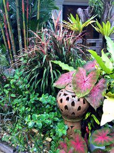 Tropical Garden Thailand