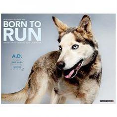Born to Run 2015 Calendar $11.99