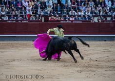 http://www.fotosdetoros.es/galeria_cat.php?cat=113