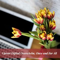 How to Uproot Digital Overwhelm, Once and For All