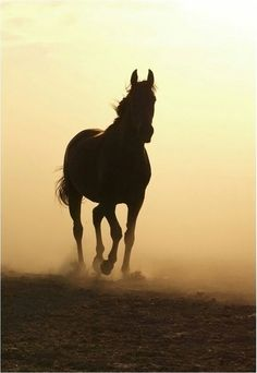 Horse running with misty sand blowing.