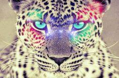 coole 3d achtergronden tijgers - Google zoeken