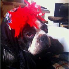 Mi perrito Chicho se va a la feria