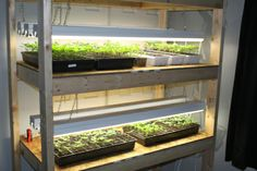 How To Build Your Own Inexpensive Seed Starting Rack - Use ordinary shop lights and grow all of your seedlings!