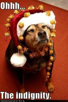 Pin by Lady Luck 2 on *+ Jingle Bells +* | Pinterest | Jingle bells