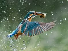 Award-Winning Wildlife Photography – Fubiz Media