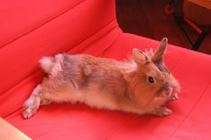Lounge Rabbit
