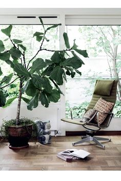 Living room with a modern green armchair and a large indoor plant Large Indoor Plants, Green Armchair, Interior And Exterior, Interior Design, Fiddle Leaf Fig, Up House, Plantar, Green Plants, Big Plants