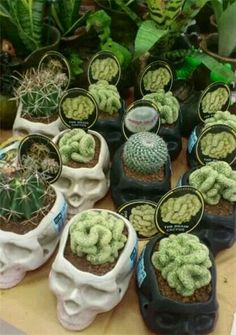 Skull planters with cactus brains