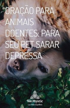 Os animais de estimação são seres divinos. Quando eles ficam doentes, nos deixam aflitos como se fosse uma pessoa. Veja a oração para animais doentes.