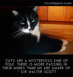 quotes about cats 14 unique quotes about cats i love cats because cats are mysterious Cat Quotes, Animal Quotes, Cat Sayings, Animal Pics, Crazy Cat Lady, Crazy Cats, Black Cat Aesthetic, Cat Races, White Cats