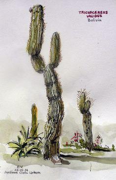 Urban Sketchers Spain. El mundo dibujo a dibujo.: Jardin Botánico Costa y Llobera - BCN