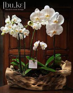 growing orchids at home Indoor Orchids, Artificial Orchids, Artificial Flowers And Plants, Orchids Garden, Orchid Flower Arrangements, Orchid Centerpieces, Floral Bouquets, Cymbidium Orchids, Orchid Pot