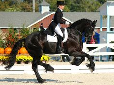 Friesian Canter now being used in dressage. by gypsymarestudios, via Flickr