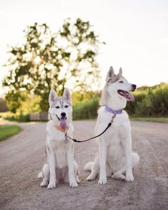 HANDSOME HUSKIES