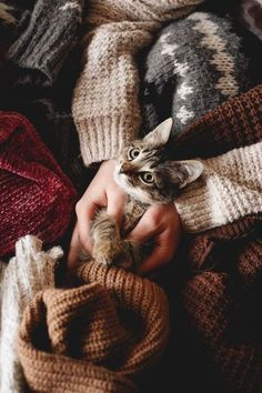 Once your kitty is all blissed out from petting, start the full body massage with slow, lightly pressured strokes down your cat's back, from their neck to the base of their tail. Animals And Pets, Baby Animals, Cute Animals, Crazy Cat Lady, Crazy Cats, Gatos Cats, Tier Fotos, Belle Photo, Beautiful Creatures