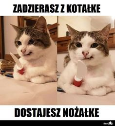 Animals And Pets, Funny Animals, Cute Animals, Cat Memes, Funny Memes, Hot Bad Boy, Polish Memes, Weekend Humor, Wtf Funny
