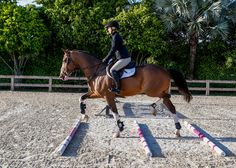 Improve Rideability for Confident Courses. Prepare your horse for the show ring by refining his adjustability with this step-by-step gymnastic exercise program.