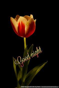 Sweet Night, Good Night Image, Good Morning, Cool Photos, Guys, Movie Posters, Good Nite Images, Buen Dia, Bonjour