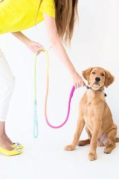 DIY Technicolor Dog Leash | Studio DIY®
