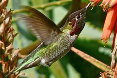 Enjoy feeding fall hummingbirds and help them on their migration with these backyard tips.