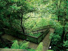 Devil's Millhopper Geological State Park, Gainesville, Florida. Devil's Millhopper is also a National Natural Landmark. Gainesville Florida, Old Florida, Florida Vacation, Florida Travel, Vacation Spots, Florida Style, Florida Girl, Vintage Florida, Vacation Ideas