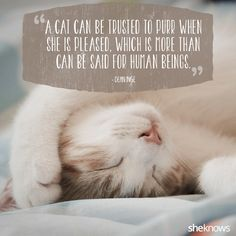 Quotes About Cats Awesome 50 Cat Quotes That Only Feline Lovers Would Understand  Pinterest