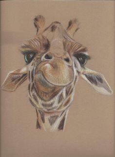 Giraffe in pencil crayon.