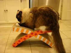 Petstages Easy Life Hammock and Scratcher – Review by Floppycats.com  http://www.floppycats.com/petstages-easy-life-hammock-and-scratcher-review-by-floppycats-com.html