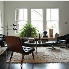 Living Room Plant