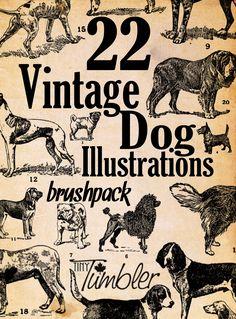 22 Vintage Dog Illustrations Brushpack by TinyTumbler.deviantart.com