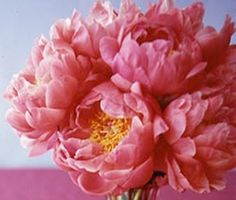 peonies pink Pretty In Pink Dress, Peonies, Our Wedding, Gardens, Rose, Flowers, Plants, Pink, Outdoor Gardens