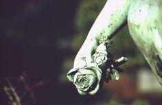 https://flic.kr/p/bxXWNX | Die letzte Rose | Kamera: Canon AE-1 Program Film: DM Paradies 100 DIA  Canon FD 70-210mm f 4.0  Meine entwickelten Dias sind endlich da ;)