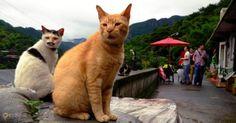Хоутонг – #Тайвань (#TW) Спасите кошек и они спасут мир! Именно такая схема сработала в масштабах небольшого тайваньского поселения Хоутонг, еще несколько лет назад рисковавшего бесследно сгинуть с лица Земли. Сейчас же деревушка вполне себе неплохо живет за счет туристов, приезжающих поглазеть на толпы благоденствующих здешних кошек. http://ru.esosedi.org/TW/places/1000136580/houtong/