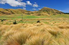 Tussock-Grassteppe, Otago, Neuseeland