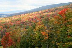 Canaan Valley in Autumn, West Virginia