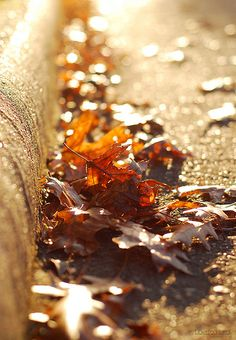leaves, street, fall, autumn