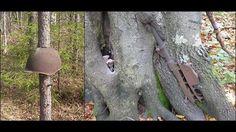 第二次世界大戦の傷跡をまるごと飲み込むロシアの森の画像 - DNA
