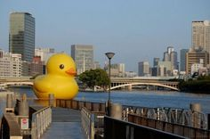 Gigantic Rubber Duckie that floats around the world and is the creation of Duthc artist, Florentijn Hofman,
