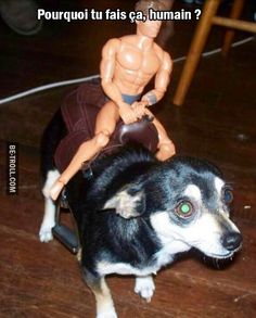 Pourquoi tu fais ça, humain ? #Animaux #Funny