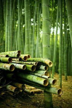 Bamboo Forest, Fushimi, Kyoto By Anthony Brown Photography Bamboo Garden, Bamboo Plants, Color Of Life, Color Of The Year, Zen Master, Bamboo Tree, Giant Bamboo, Chinese Landscape, Arte Floral