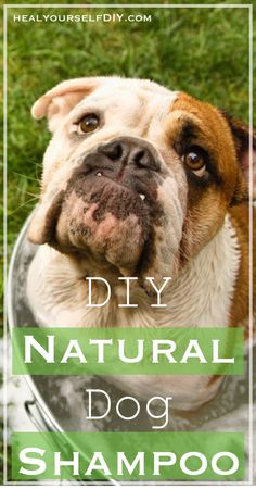 DIY Natural Dog Shampoo | www.healyourselfdiy.com