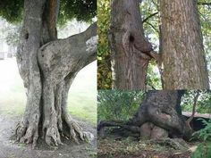 Guess we learned from the trees?
