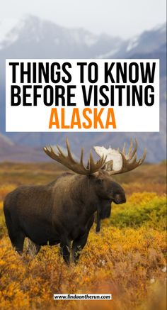 9 things to know before traveling to Alaska| What you need to know as you plan your Alaska trip| Alaska tips| Alaska packing list #alaska #usatravel #travel