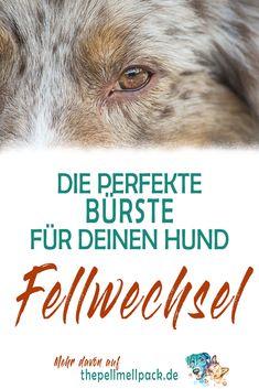 Der Fellwechsel steht an – und wir haben Empfehlungen für die besten Bürsten   Hund   Fellpflege   Hundebürste   Fellwechsel   Bürste Hund   Hundefell   thepellmellpack.de #fellwechsel #fellpflege #hund