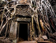 Doorway smothered by tree roots, Ta Prohm