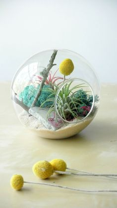 NEW Colored Oasis Air Plant Tillandsia by theZenSucculent, $42.00