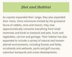 Coyote Facts, Coyote S, Large Animals, Mammals, Habitats, How To Plan