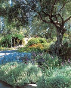 Need some low maintenance garden design ideas? Dry Garden, Forest Garden, Garden Paths, Garden Landscaping, Mediterranean Garden Design, Drought Tolerant Landscape, Xeriscaping, Italian Garden, Garden Cottage