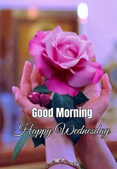 Good Morning Happy, Good Morning Quotes, Good Happy Quotes, Happy Wednesday, Rose, Flowers, Pink, Roses, Florals